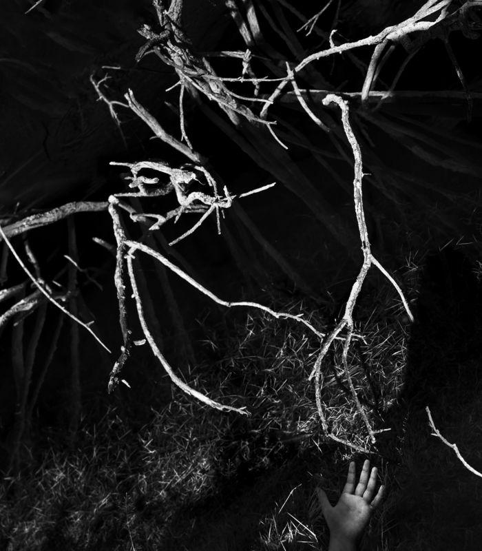 чб,арт,природа,ладонь Ловушка для сновphoto preview