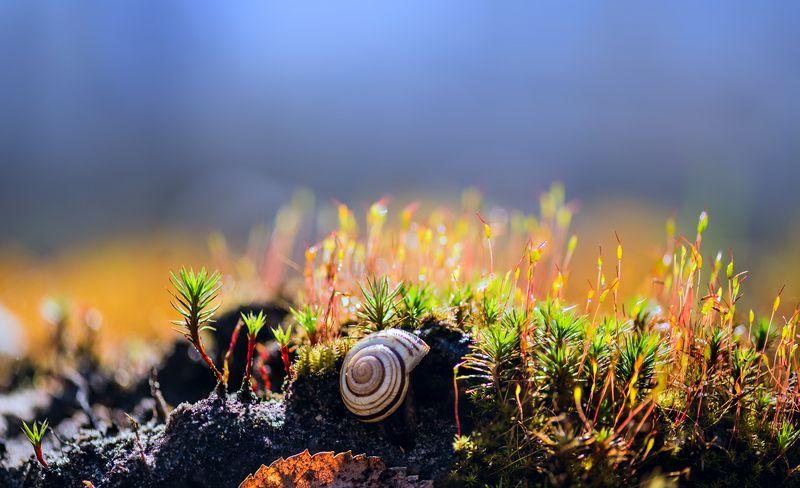 мох, весна Этот огромный мир под ногамиphoto preview