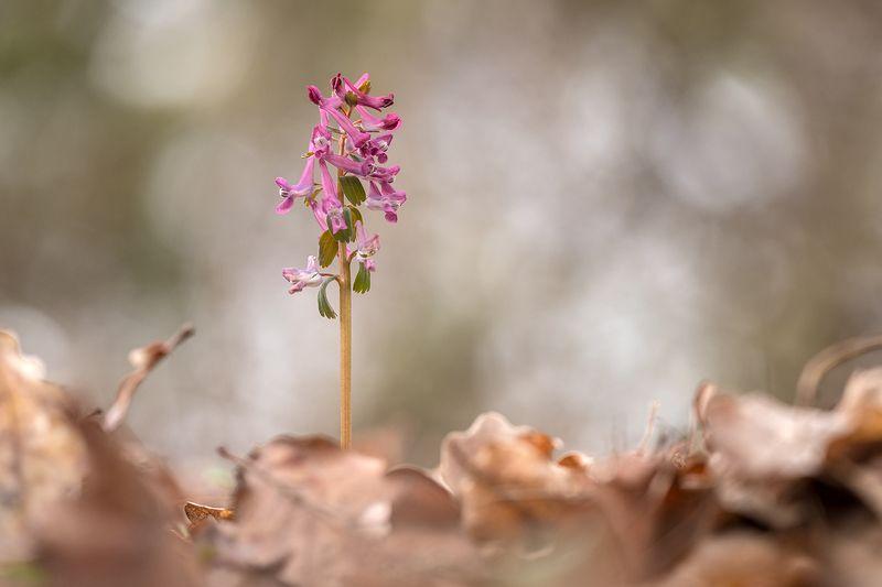 Весна на осенних листьяхphoto preview