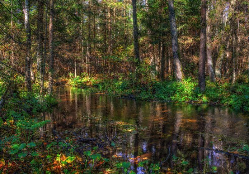 лето, ручей, утро, лес, Лесной ручейphoto preview