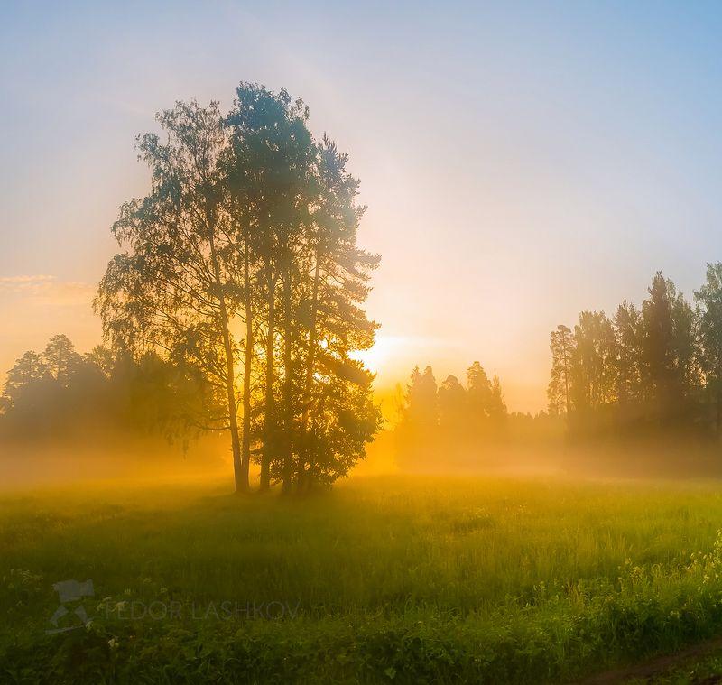 ленинградская область, рассвет, павловск, парк, прогулка, дерево, небо, туман, туманное, сосна, июль, лето, Туманное утроphoto preview
