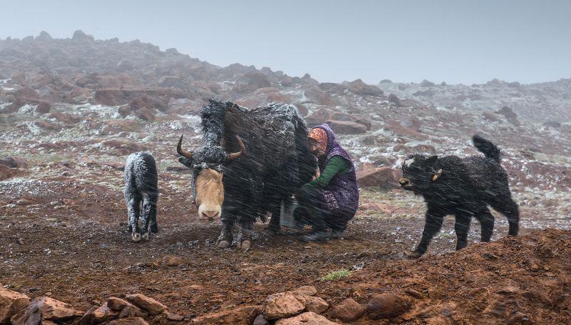 Киргизия, Алайский, Алайская, Памир, Памирскийтракт, Памирский_тракт ...photo preview