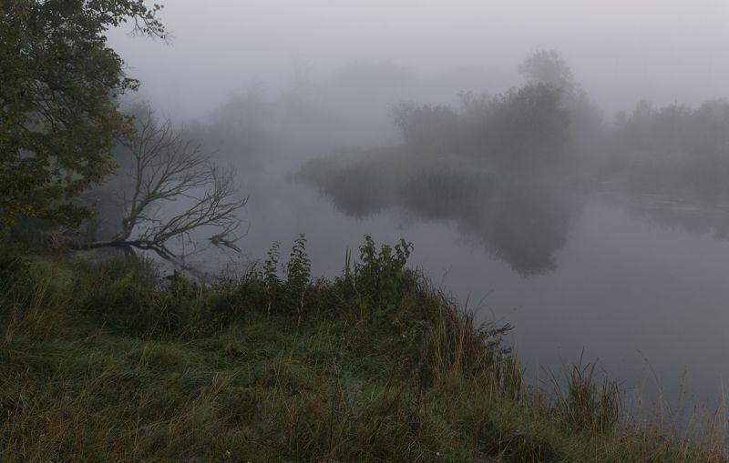 на старых прудах...photo preview
