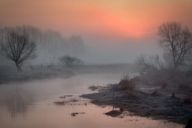 река, шерна, утро, туман, деревья, рассвет, вода, Теплеетphoto preview