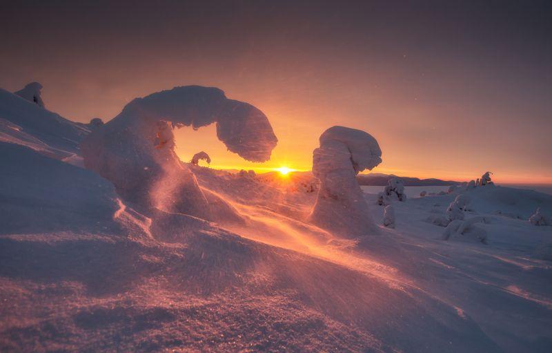 кольский Розовый север.photo preview