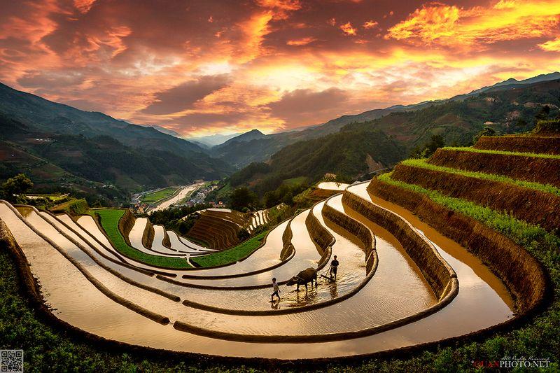 quanphoto, landscape, sunset, sundown, rice, terraces, valley, farmland, farming, agriculture, mountains, rural, culture, vietnam Rice Terraces Sunsetphoto preview