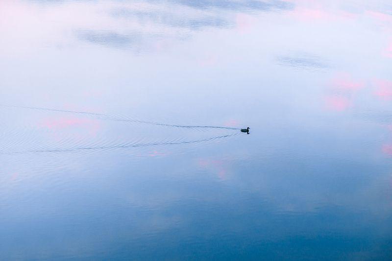 коростишiвский карьер, тишина, безмолвие, гармония, карьер, весна, утка, украина, коростышев \