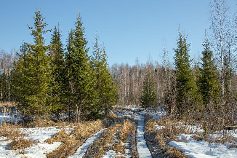 апрель снег лес опушка дорога Апрельский лесphoto preview