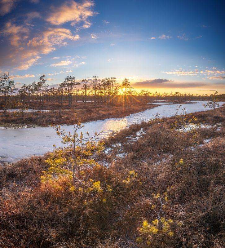 болото, ленобласть, весна ***photo preview