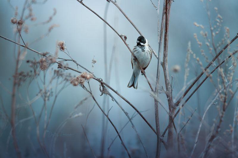 природа, лес, поля, огороды, животные, птицы, макро ... весенним утромphoto preview