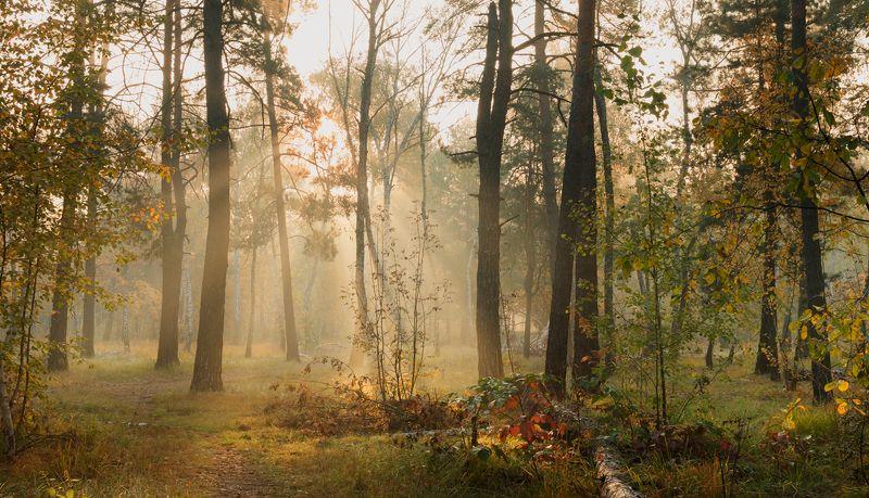 осень, октябрь, утро, рассвет, туман Тихая осеньphoto preview