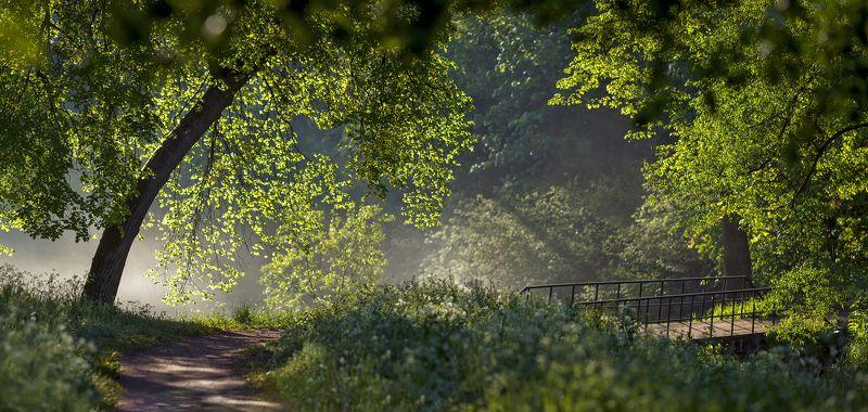 питер, пейзаж, природа, бип, павловск, мариенталь, мариентальскийпарк В начале лета)photo preview