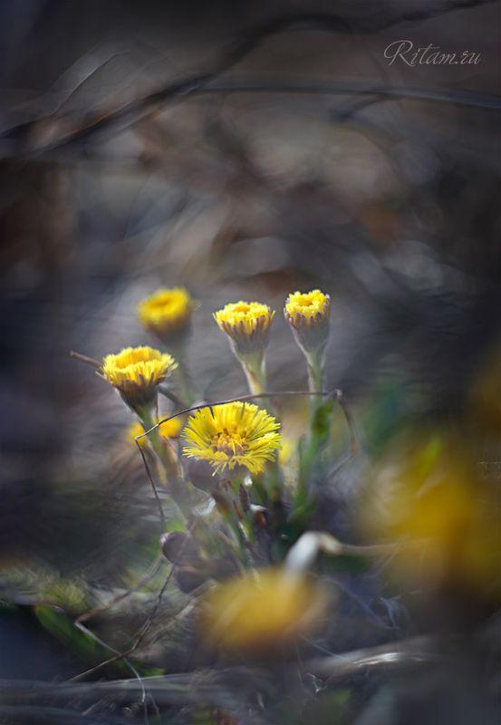 в Живые солнышки Весны / The Living Suns of Springphoto preview