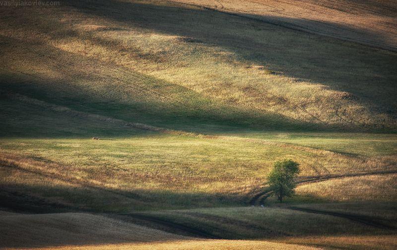 яковлевфототур, фототур, василийяковлев, урал, долгие горы Оренбургская пасторальphoto preview