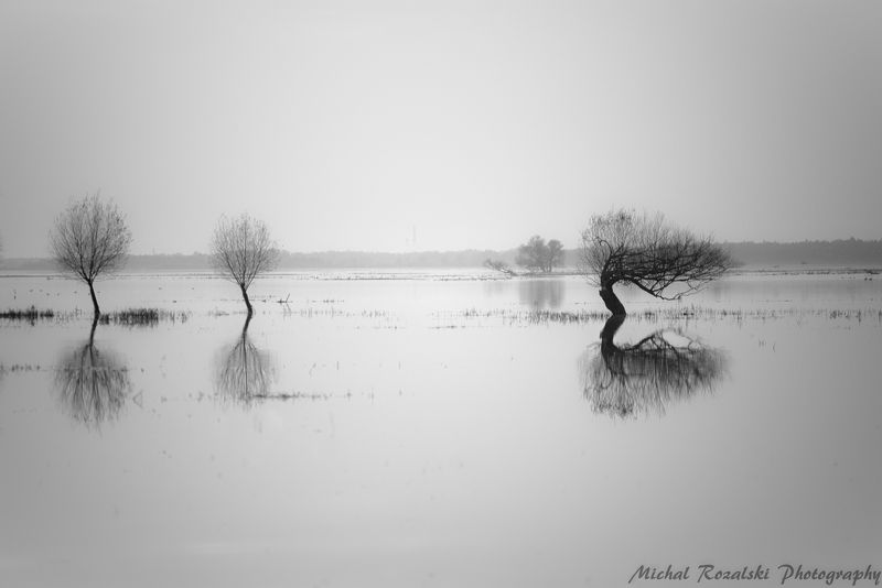 trees, ,water, ,lake, ,horizon, ,blackandwhite, ,landscapes, ,reflections, ,sky Waterworldphoto preview