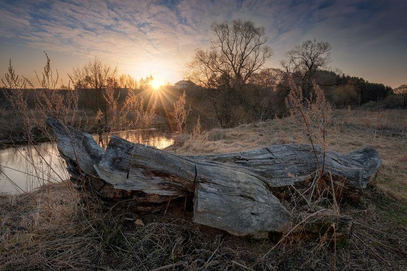 река, истра, утро, коряга, деревья, рассвет, вода, Коряга пригреласьphoto preview