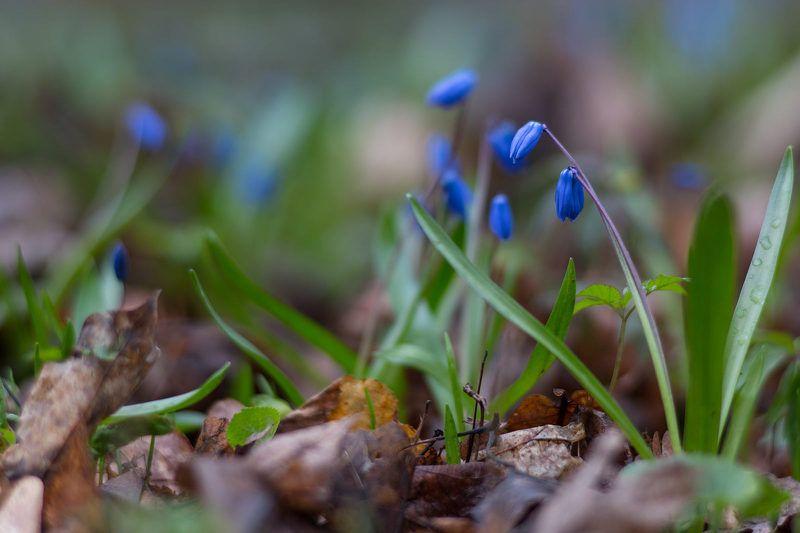 Синий цветочекphoto preview