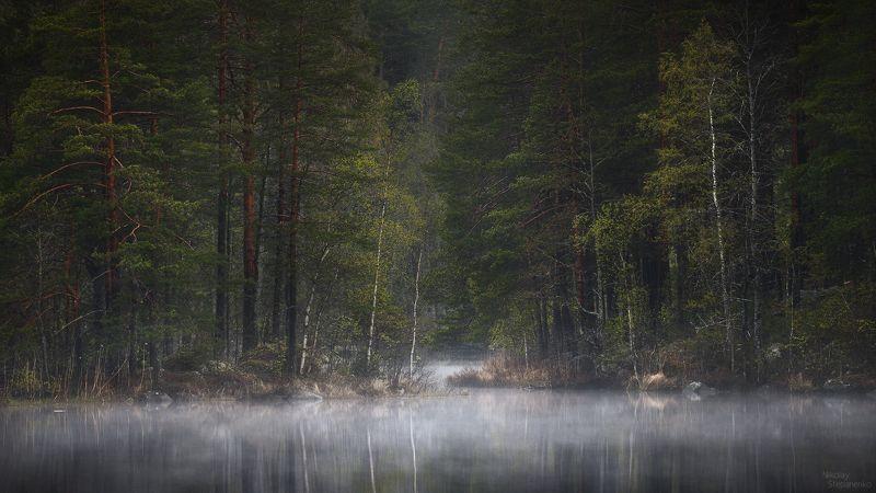 весна, лес, озеро, тайга, ленинградская область, выборгский район Кукушкаphoto preview