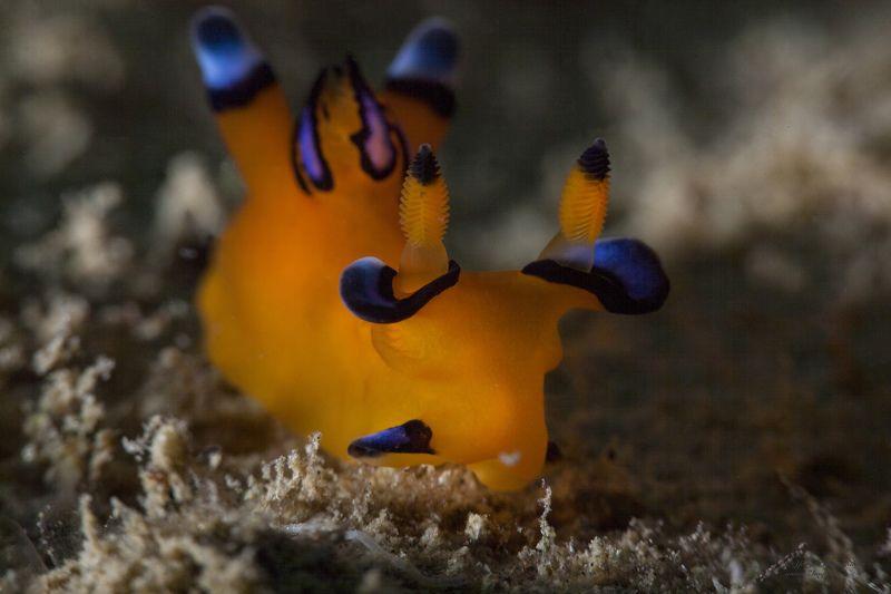 подводное фото подводный мир хургада египет жогло zhoglo красное море Пикачуphoto preview