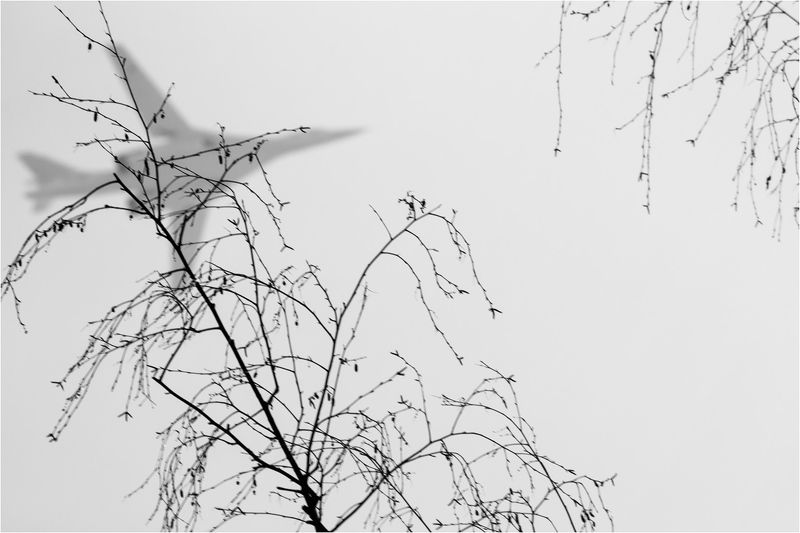 Тень Белого Лебедяphoto preview