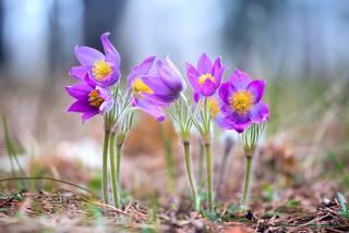 Весеннее великолепие