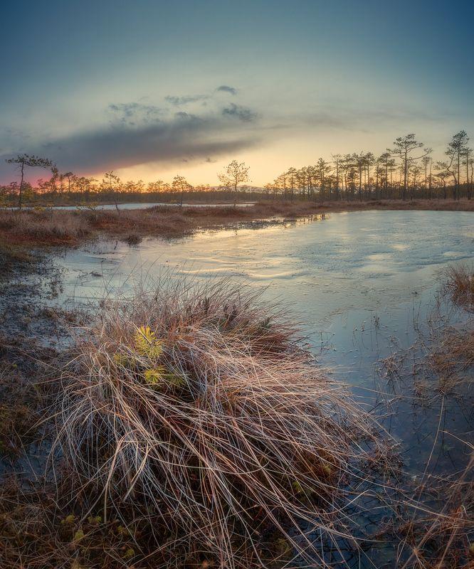 болото, весна, закат ***photo preview