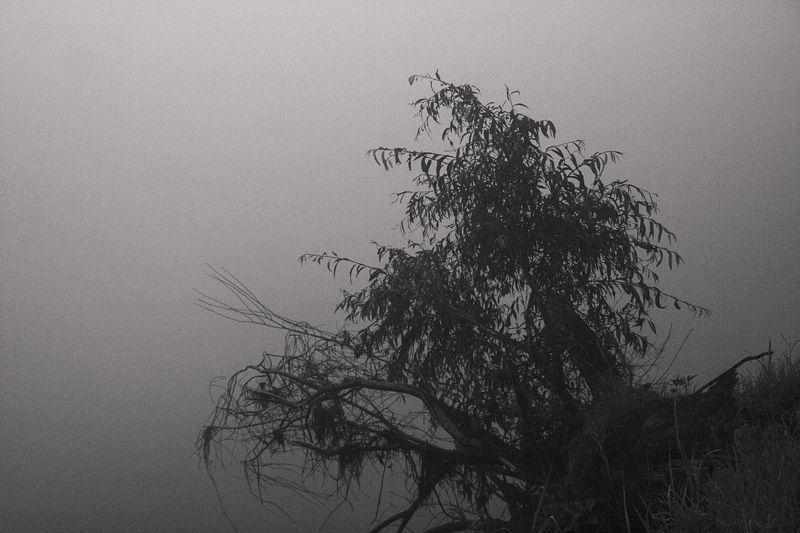 пейзаж, утро, озеро Серия \