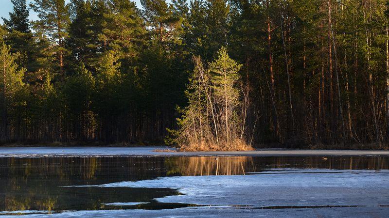 весна, болото, ленобласть, заповедник, заказник, красиво, апрель, остров, абстракция, свет, солнце, пляж Островок в солнечных лучах.photo preview