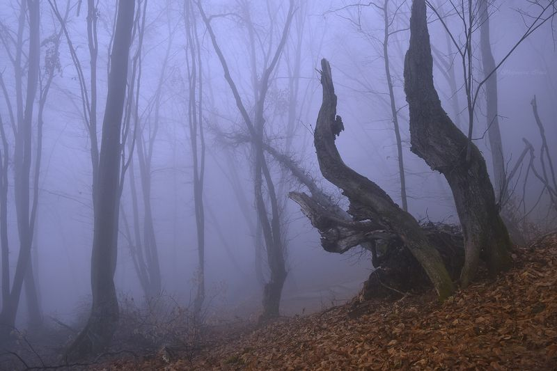 Мистика туманного леса фото превью