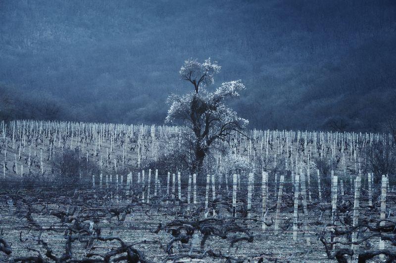 Абрикос и виноградникphoto preview