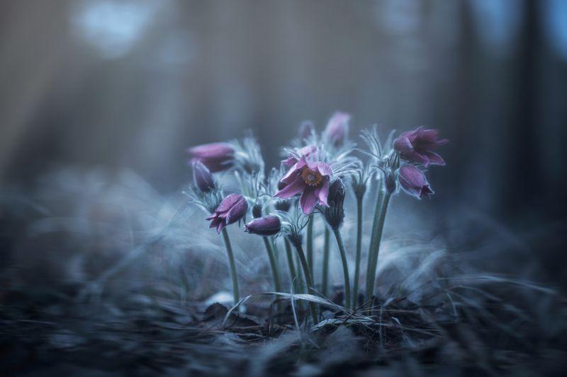 Весеннее благоухание цветов фото превью