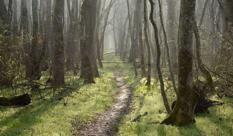 весна туман лес утро Весеннее утро в лесуphoto preview