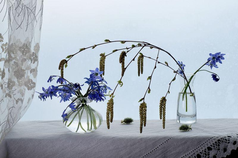 Still life, Scilla siberica, Siberian squill, первоцвет пролеска сибирская, flowers, Spring, flora, blue, birch, glass, nature,  Ласковый апрельphoto preview