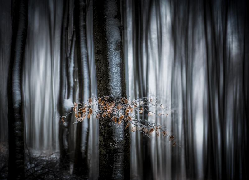 #landscape#nature#trees#forest Moody forestphoto preview