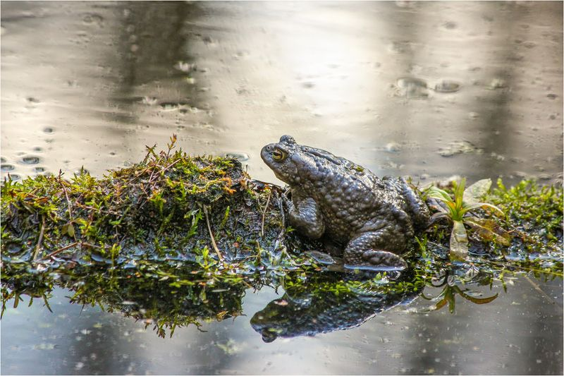 жаба Сидим, жениха ждем.photo preview