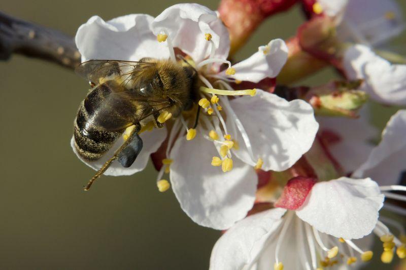Пчела с обножкой чёрного цветаphoto preview