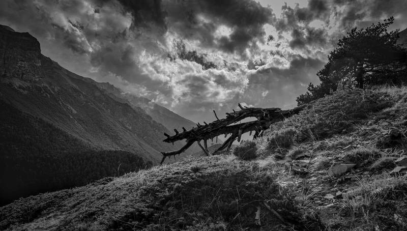 Чегемский дракон .photo preview