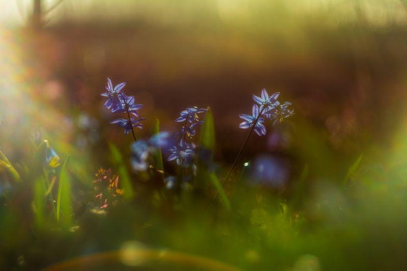 весенний лес, пролески, подснежники, весна Первоцветыphoto preview