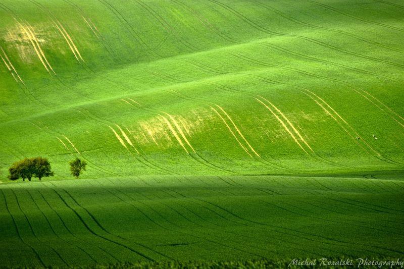 trees, ,hills, ,spring, ,season, ,fields, ,green, ,grass, ,landscape, ,photography Tsunamiphoto preview