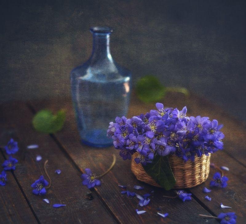 натюрморт,цветы,весна,печеночница,первоцвет печеночница )photo preview