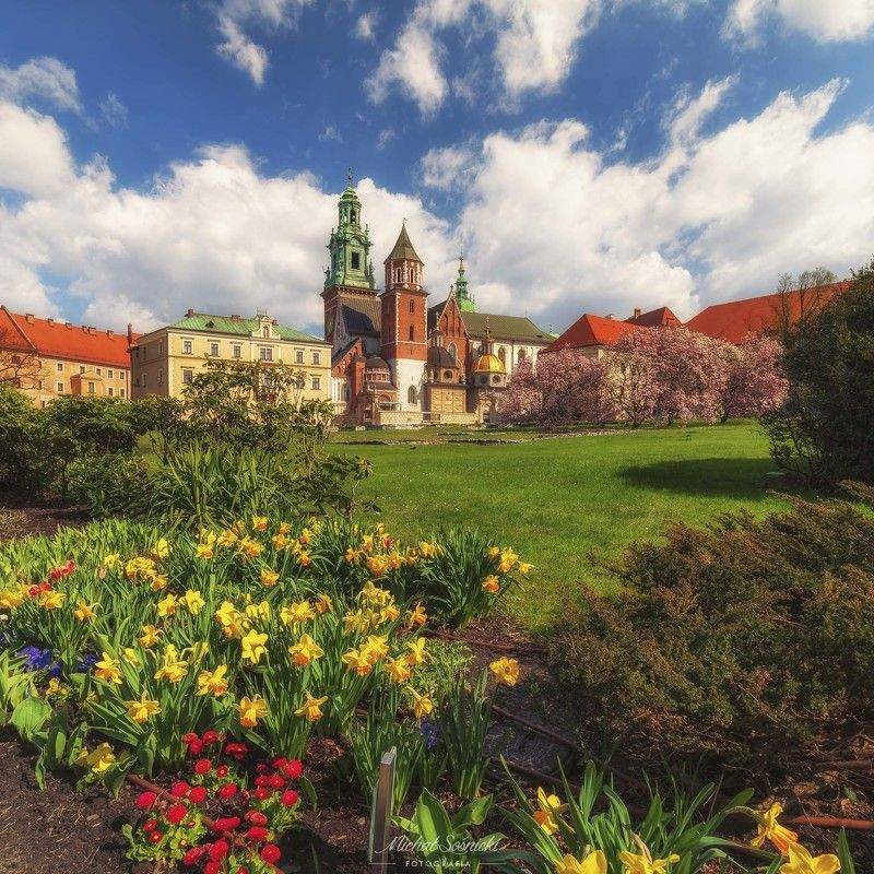 #castle #wawel #poland #flowers #magnolie #nature #benro #benq #pentax Castle Wawel.photo preview