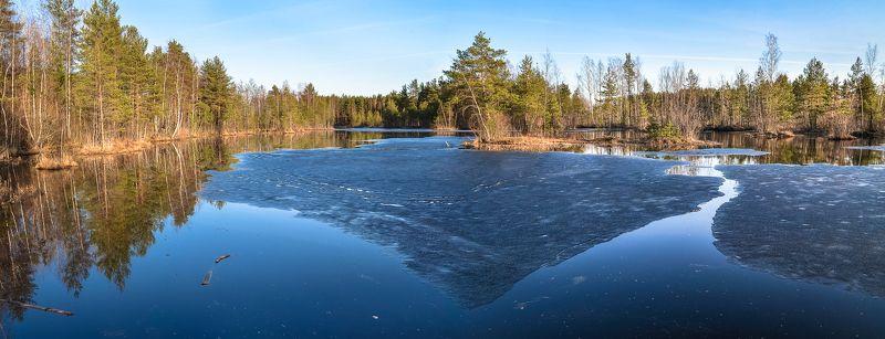 весна, болото, ленобласть, заповедник, красиво, апрель, озеро, экотропа photo preview