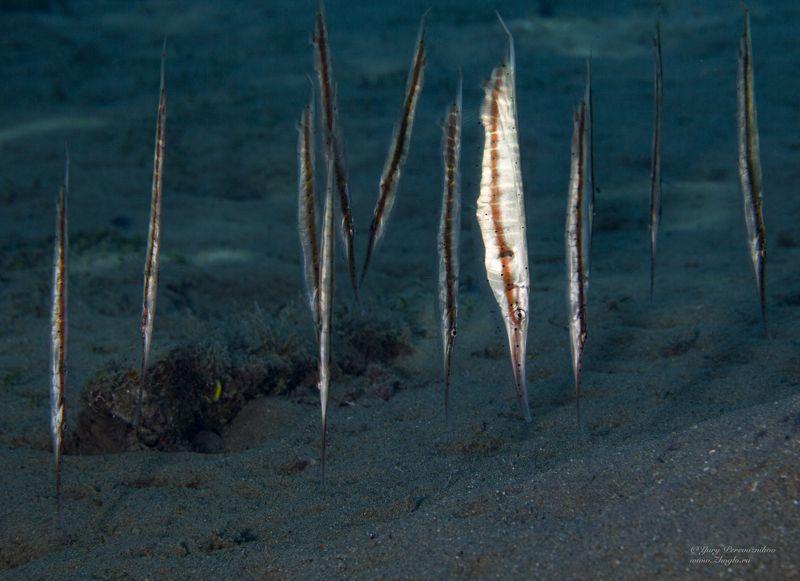 подводное фото подводный мир хургада египет жогло zhoglo красное море Вертикальные рыбкиphoto preview