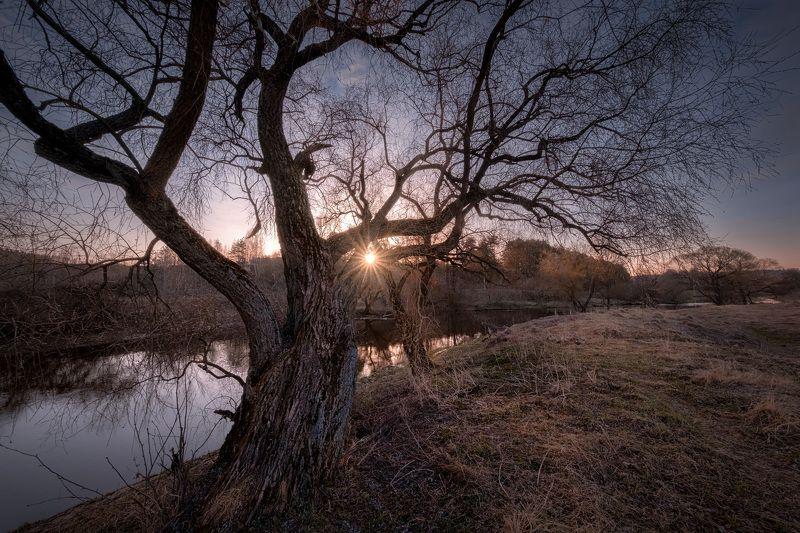 река, истра, утро, дерево, рассвет, вода, пейзаж Весна старого великанаphoto preview