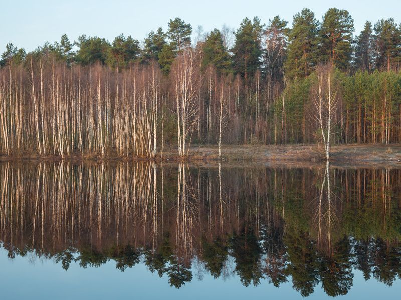 апрель отражение черная порза Апрельское зазеркальеphoto preview