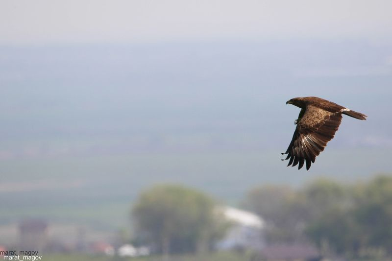 арёл,небо,птица,хищная птица,дагестан, Крутой разворот..photo preview