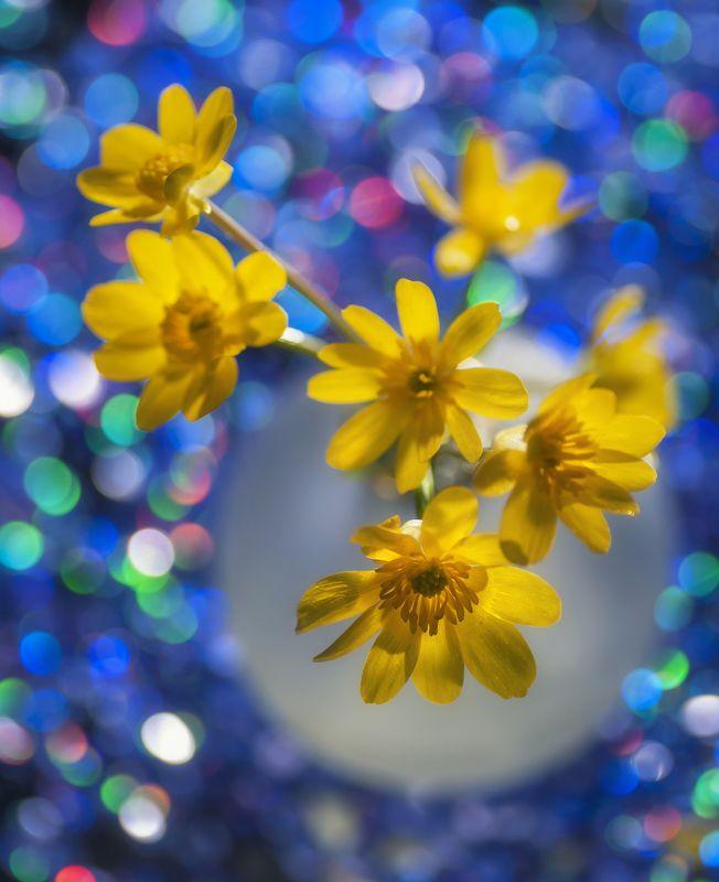 цветы,сон,иллюзия,весна,блики,бокэ,жёлтые,размытие Весенний сонphoto preview