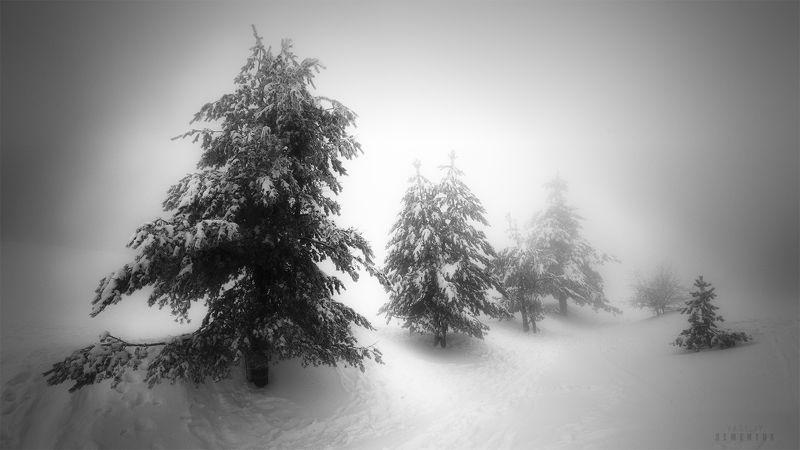 крым, ай-петри, сосны, снег, метель, мороз, деревья, минимализм, ч/б, landscape, blizzard, trees, minimalism, b/w. Снежная сказка Ай-Петриphoto preview