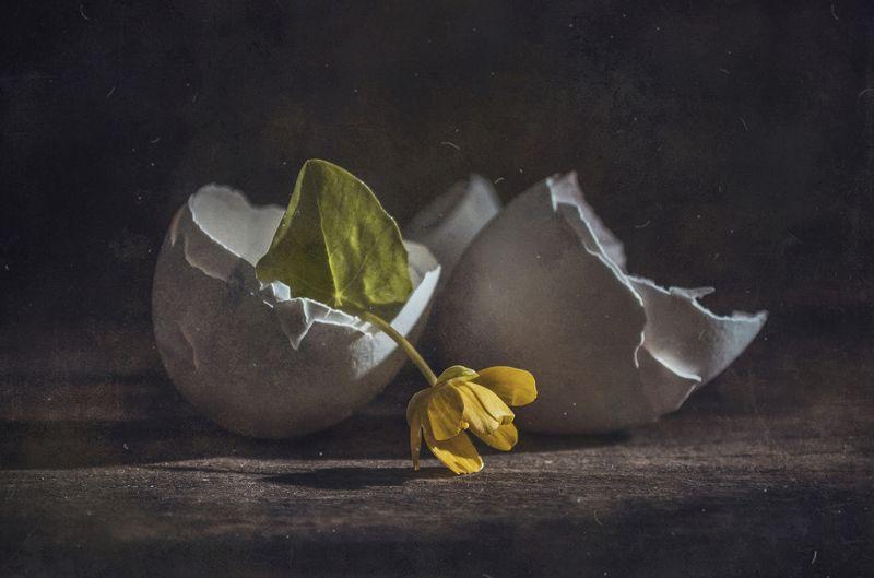 яичная скорлупа,цветок,темный,текстура,пыль,вялость \