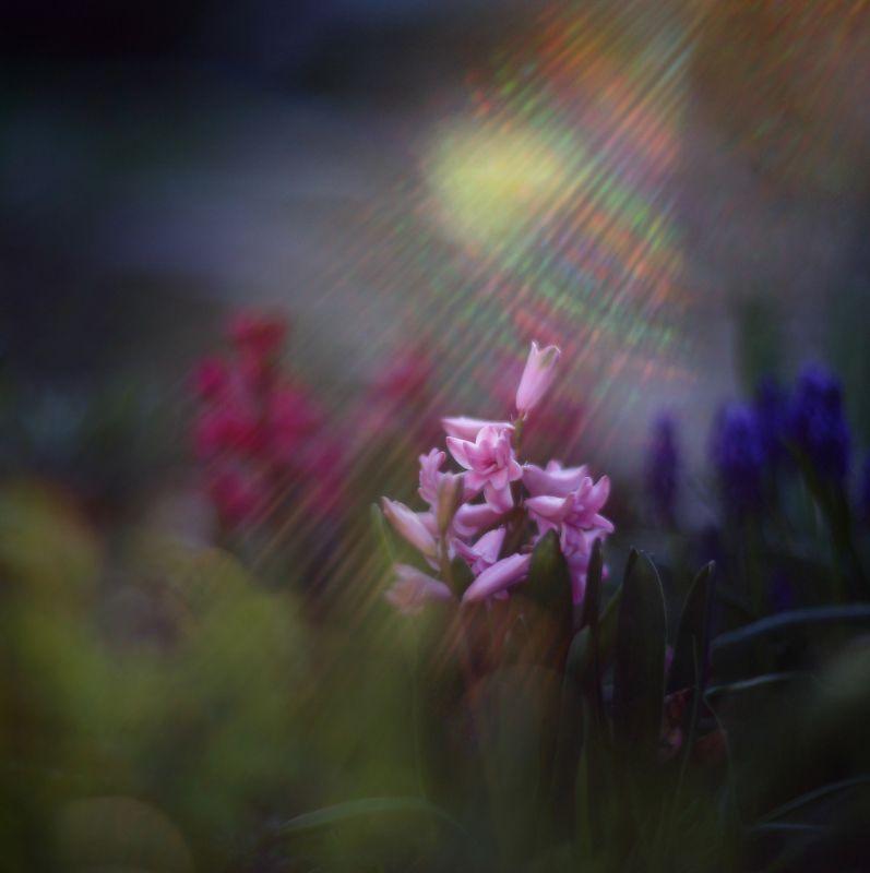 вечер, апрель, весна, лучи, свет, цветы photo preview
